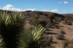 Seeking Travel Ideas: Like Tucson, But Different