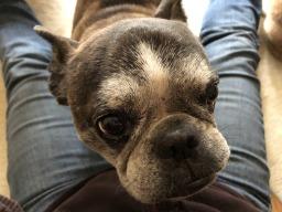 Three Days in Seattle – A Petsitter's Tale,  Part 1: Petsitting