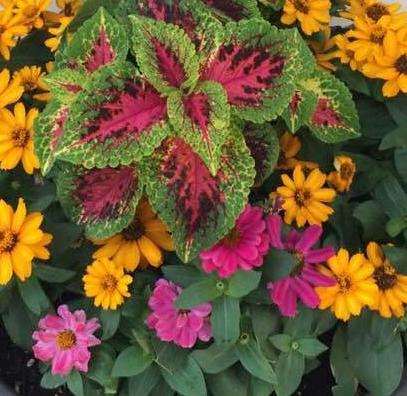 flowers1-e1558643763496.jpg