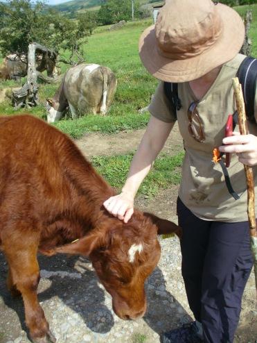 Nice cow.