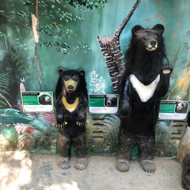 Sun bear (L); Moon bear (R)