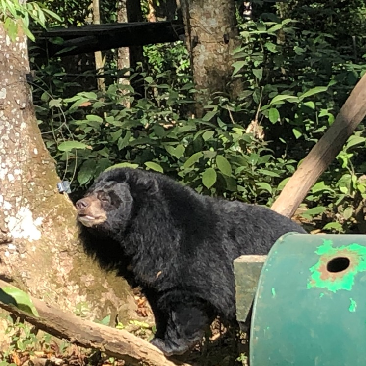Laos Kuang Si Bear Sanctuary (4)