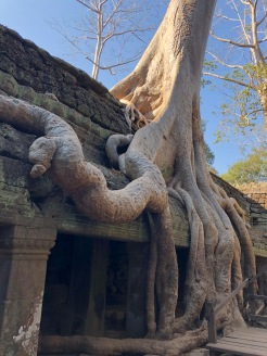 Cambodia Angkor Ta Prohm jungle temple (25)