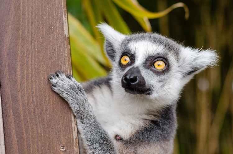 nature eyes grey fur