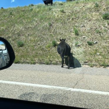 Utah scenic hwy 12 views (4)
