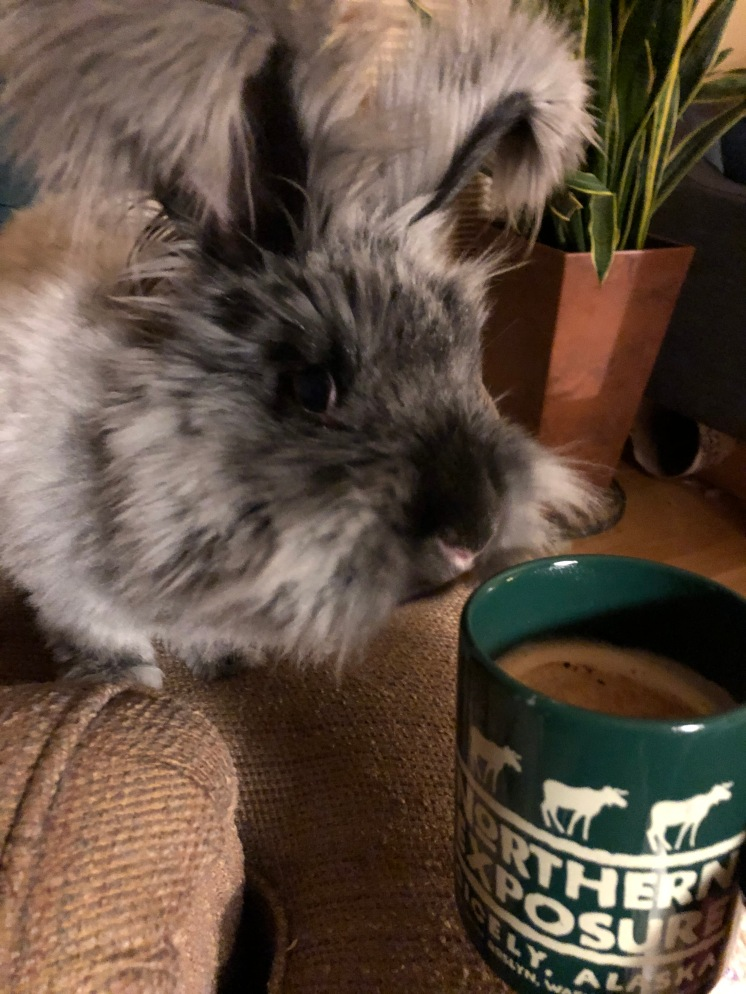These are a few of my favorite things: cappuccino, Northern Exposure, and my bunny.